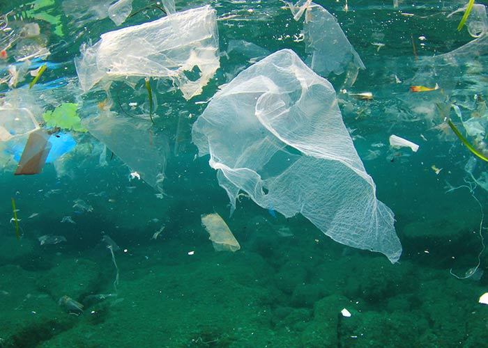 How Plastic Bags are Harmful to Marine Life