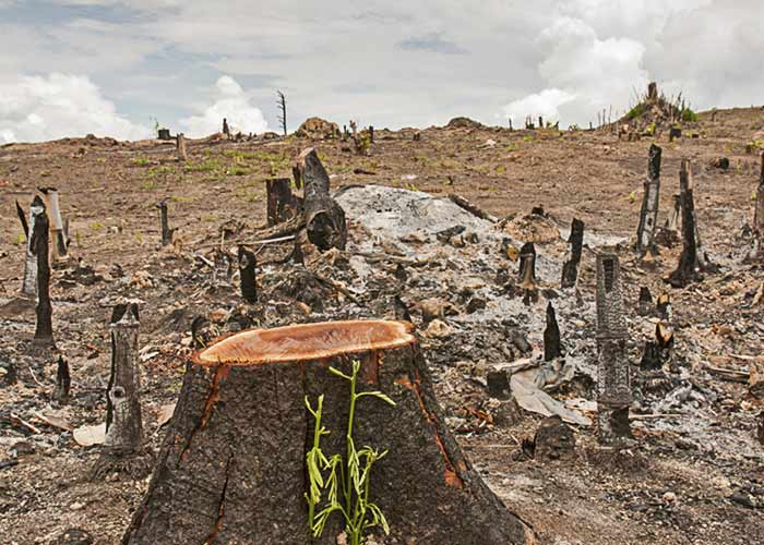 essay deforestation effects This free environmental studies essay on essay: deforestation is perfect for environmental studies students to use as an example.