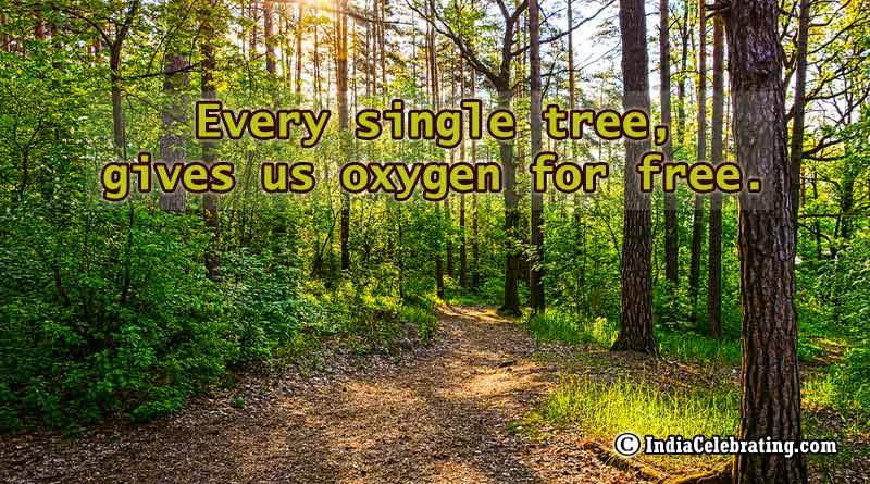 Every single tree, gives us oxygen for free.