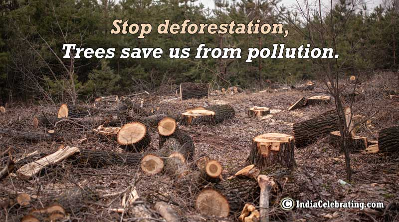 Stop deforestation, Trees save us from pollution.